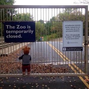 Un ragazzo guarda il National Zoo di Washington, DC, temporaneamente per ordine del governo.