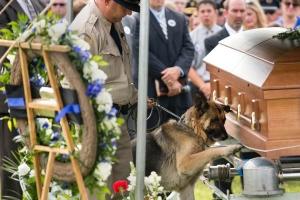 Figo, un cane poliziotto Kentucky, da  il suo ultimo saluto al suo partner, l'agente Jason Ellis, che è stato ucciso in un agguato cinque giorni prima.
