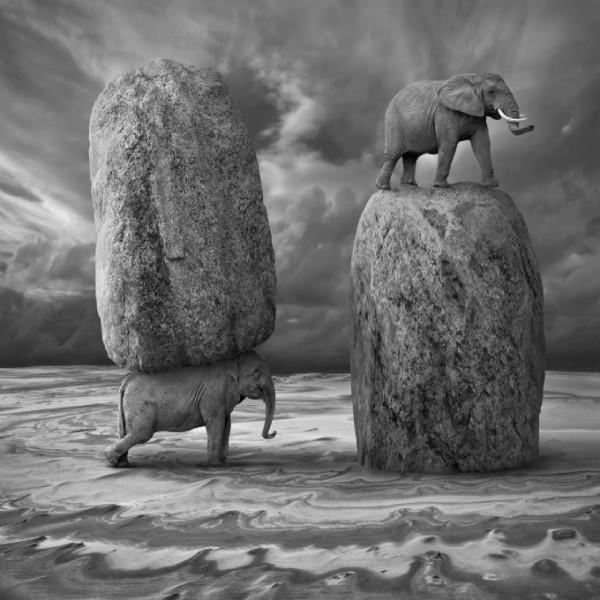 elephant-600x600