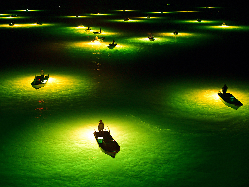Young Eel Fishing Peaks In Tokushima