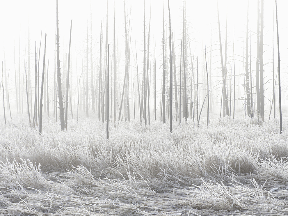 Frosted landscape along Tangled Creek in Yellowstone National Park.